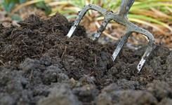 Kotoran Ternak Sebagai Sumber Pupuk Hidroponik