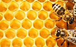 melestarikan-hutan-pelawan-rumah-habitat-lebah-madu-pahit