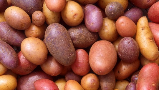 Cara jitu Penyimpanan kentang bibit yang baik dan benar