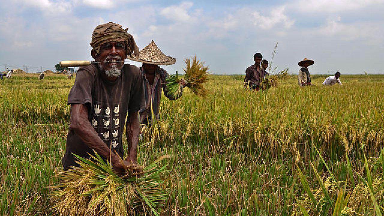 Langkah Awal Pengolahan Tanah Teknik SRI
