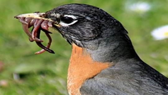 Cara burung mencari makanan di alam