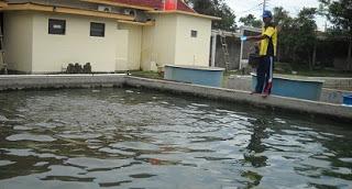 cara budidaya ikan,pengertian budidaya perikanan,budidaya perikanan air tawar,contoh budidaya perikanan,polinela,perikanan judul,perikanan xls,