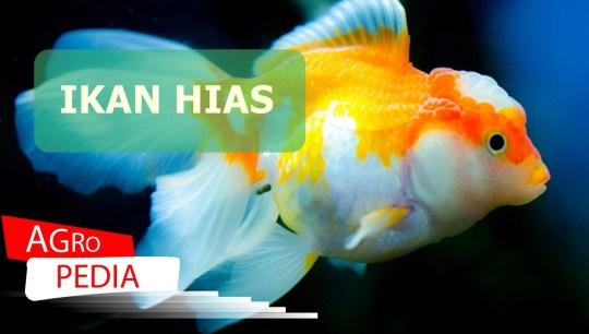 Produksi ikan hias dari laut