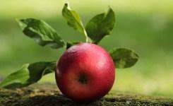 apel merah