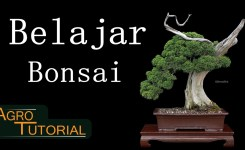 Belajar Bonsai