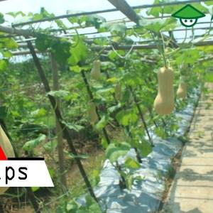6 Lowongan Kerja Pertanian Yang Pasti Diterima