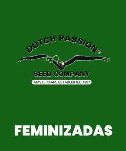 Dutch Passion FEM