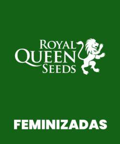 Royal FEM