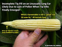 Poor tip fill on unusually long ear