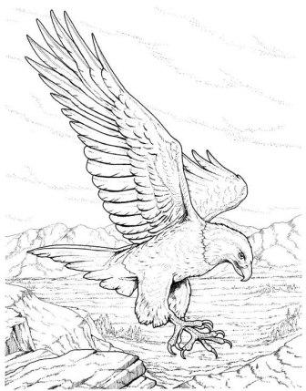 Dibujos de águilas » AGUILAPEDIA