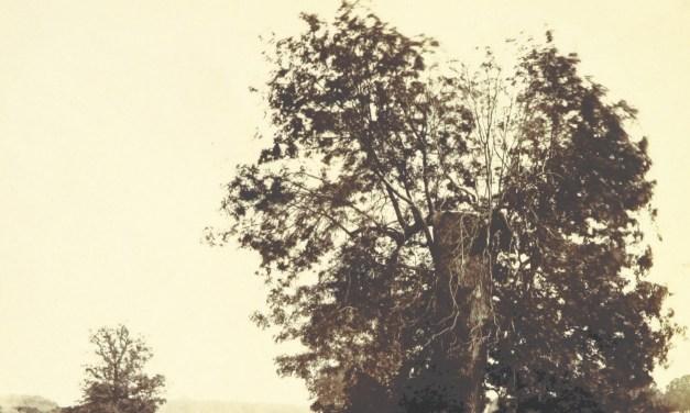 Invitados al Árbol de los Mil Nombres