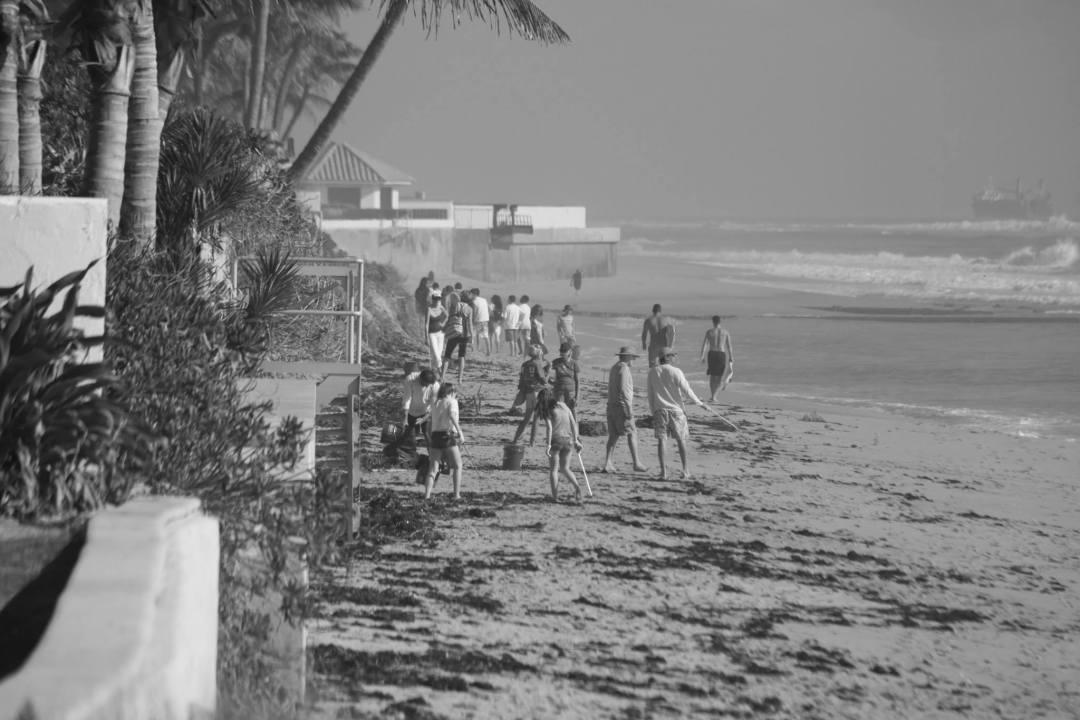 Adopt-The-Palm-Beaches-bw