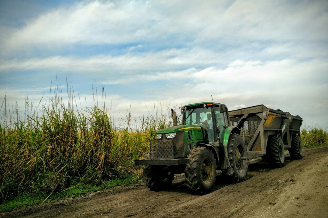 US Sugar tractor moving freshly cut sugar cane near Clewiston