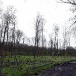 39-Dessau-Roßlau Dessau Fürst-Franz-Weg Waldgebiet Nördlich Luisium Blick Nach Nordosten