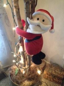 Santa trying to climb my Joshua tree.