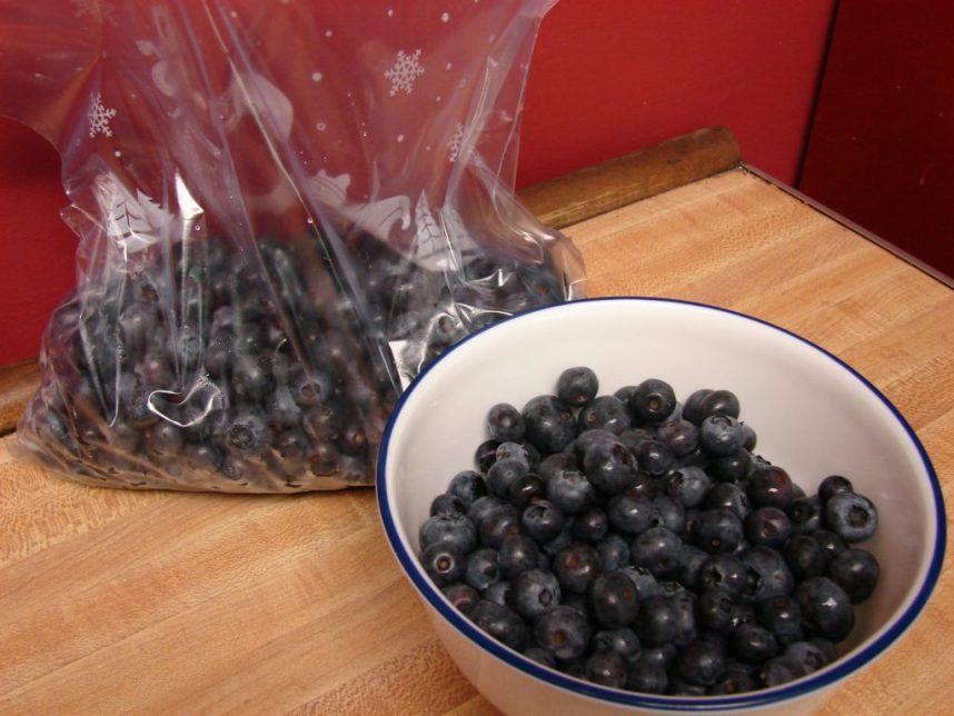 blueberry bumper crop