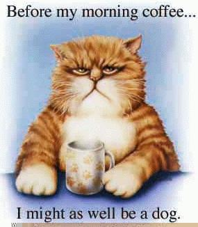 A cat without coffee