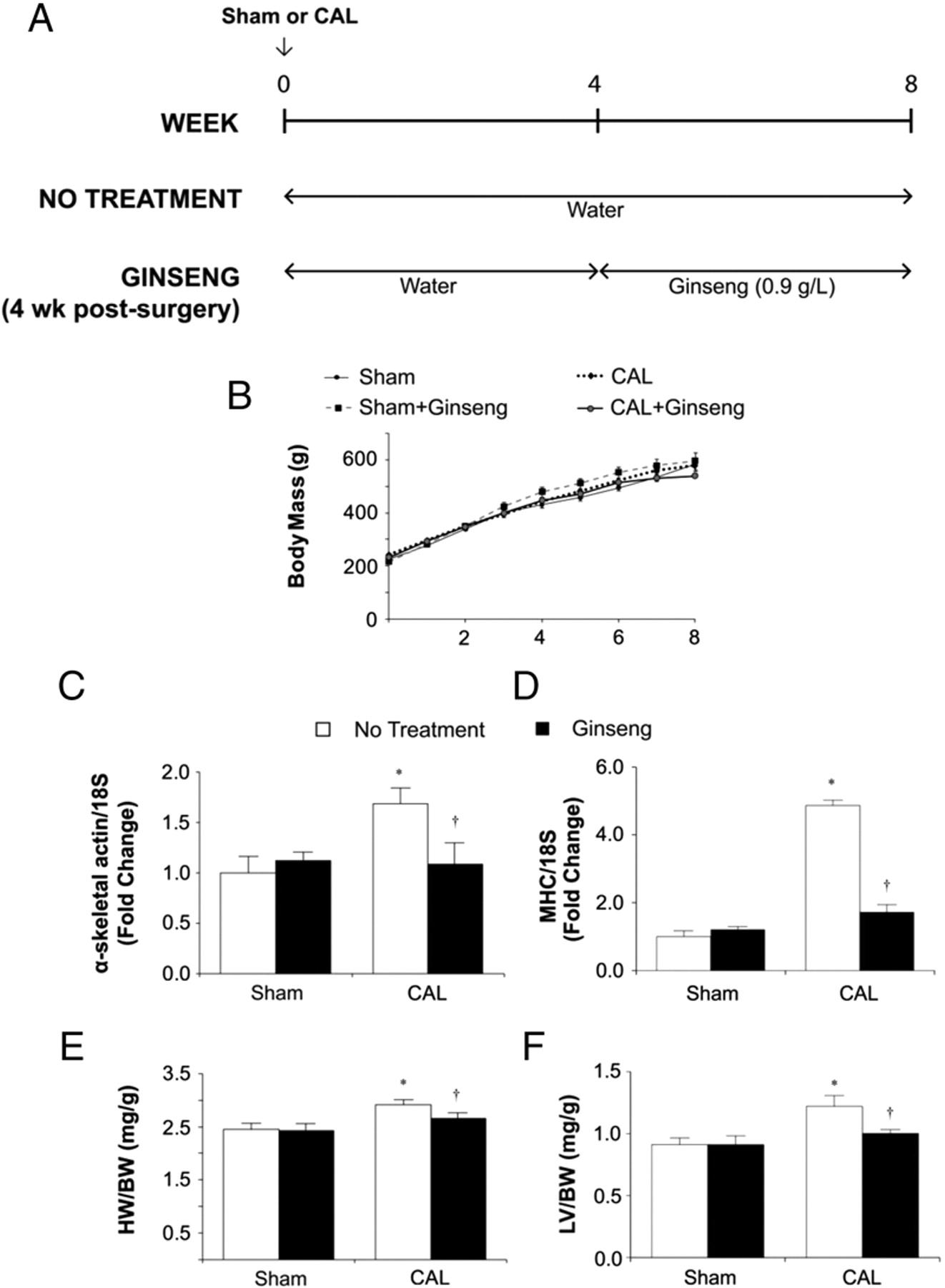 Ginseng Reverses Established Cardiomyocyte Hypertrophy and