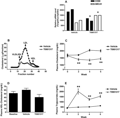 Macrophage Liver X Receptor Is Required for