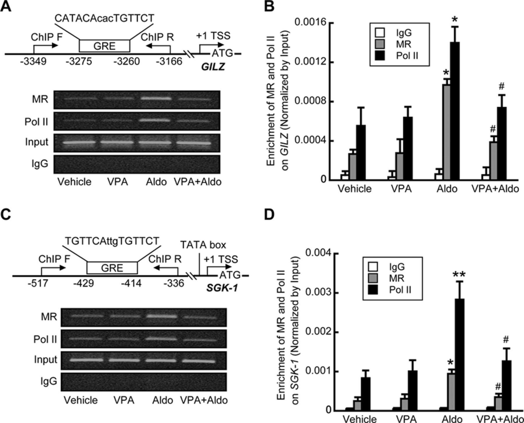 Histone Deacetylase Inhibition Attenuates Transcriptional