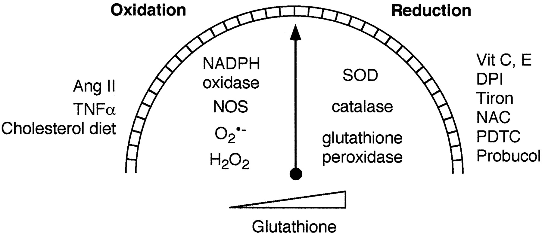 Modulation of Protein Kinase Activity and Gene Expression