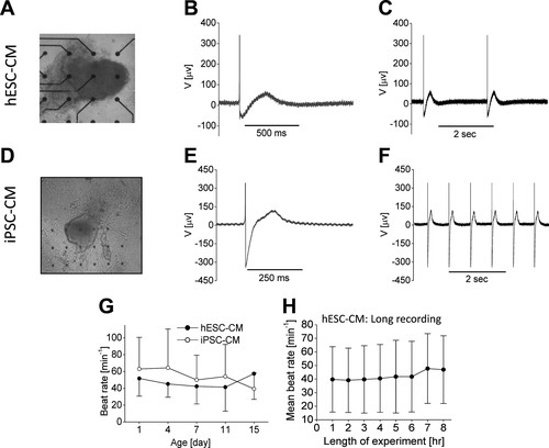 Human Embryonic and Induced Pluripotent Stem Cell–Derived