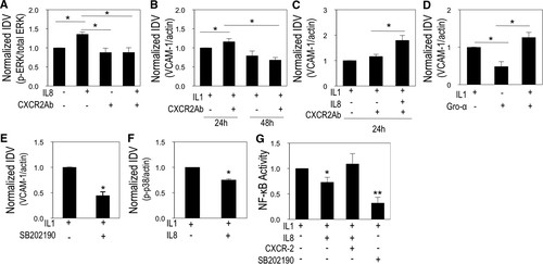 Human IL-8 Regulates Smooth Muscle Cell VCAM-1 Expression