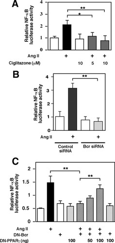 Bcr Kinase Activation by Angiotensin II Inhibits