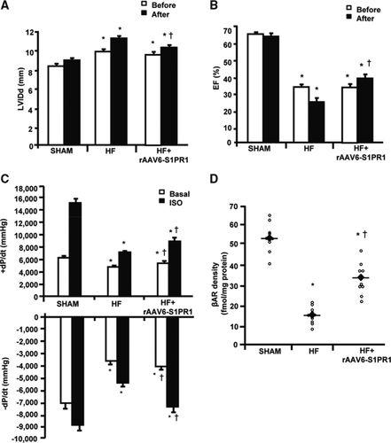β1-Adrenergic Receptor and Sphingosine-1-Phosphate