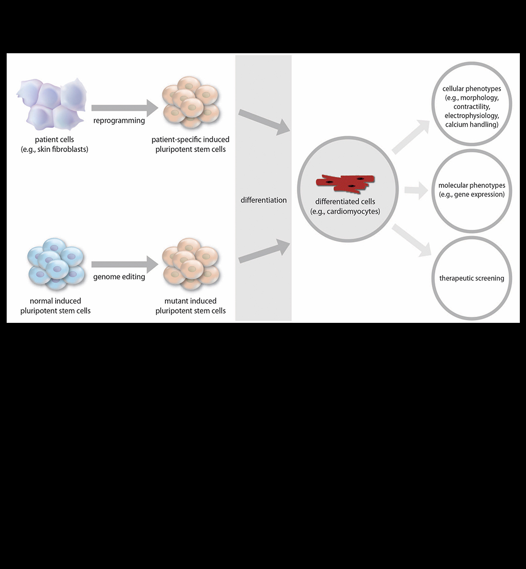 hight resolution of induced pluripotent stem cells for cardiovascular disease modeling and precision medicine a scientific statement from the american heart association