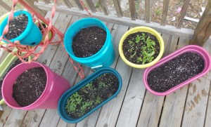 Growing-Container-Vegetables