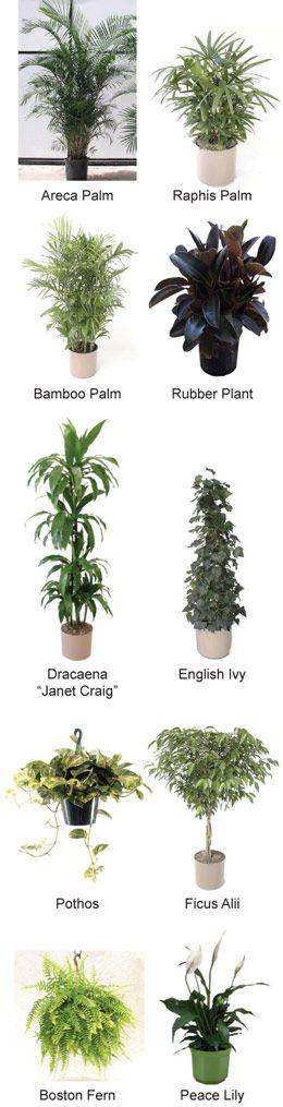 10 kamerplanten die de lucht zuiveren  Voeding en