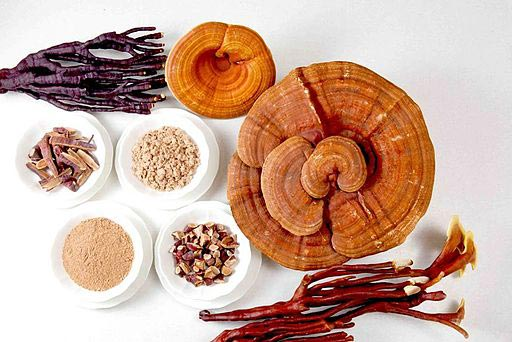 Ganoderma Benefits: A Mushroom Fit For A King