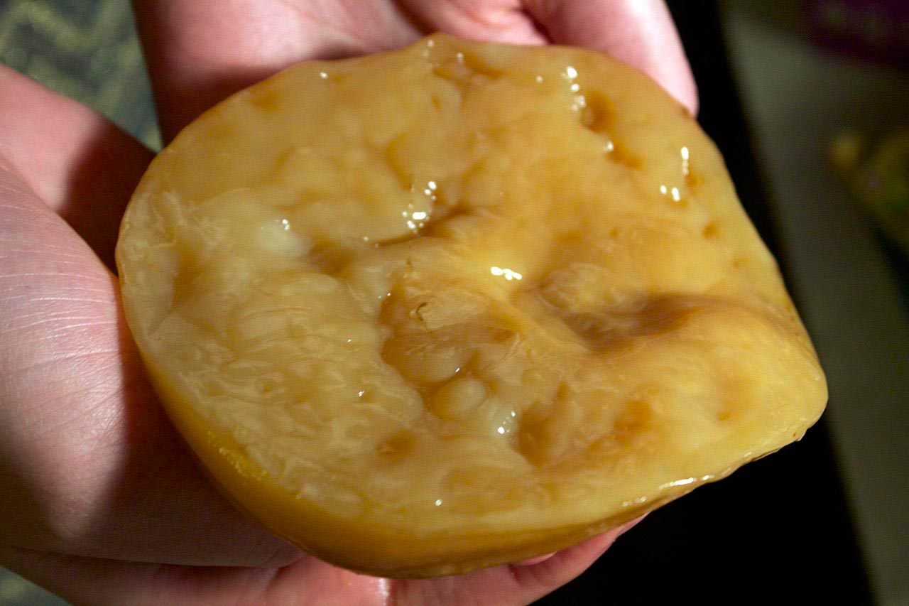 How to grow a kombucha scoby