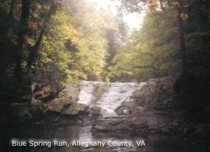 Blue Spring Run Donated by Donna Dressler-Miller