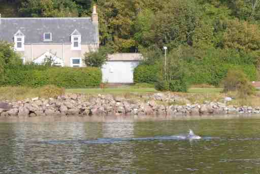 Dolphin spotting at Chanonry Point