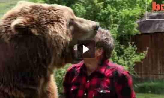 قمة الجرئة والثقة رأسه في فم الدب