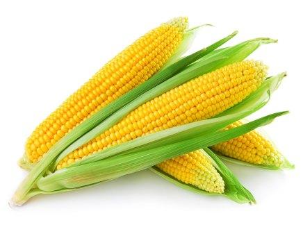 تعرفوا معنا على فوائد الذرة