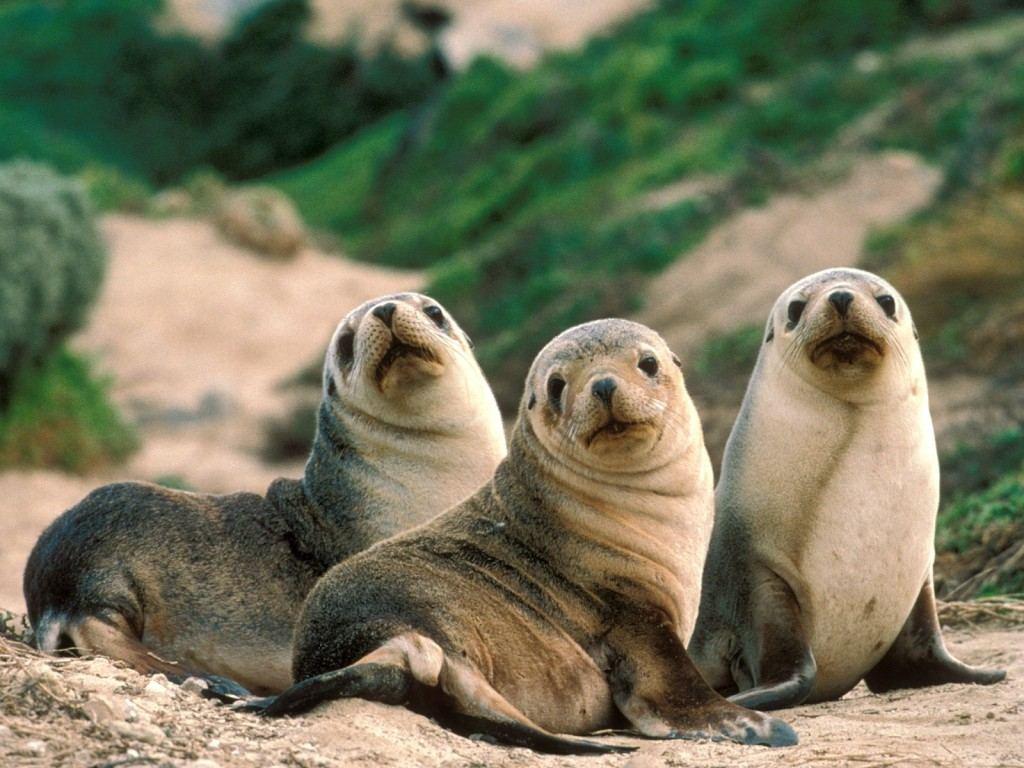 لقطات رائعة للحيوانات البرية