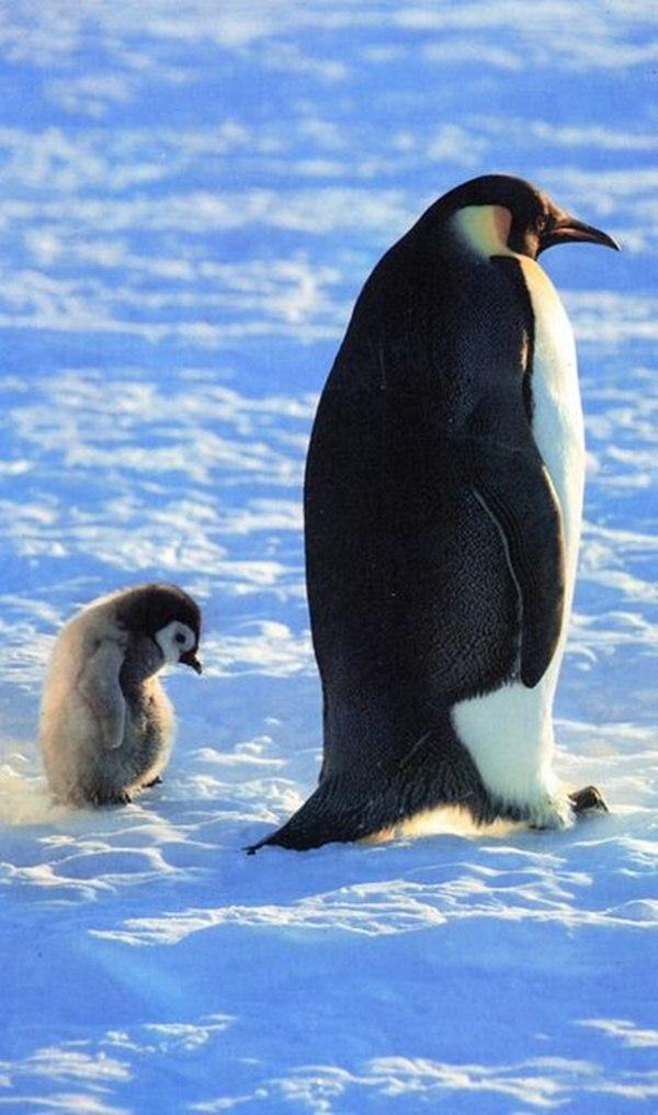 صور حيوانات على الثلج