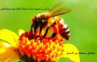 حقائق عن النحل ومنتجاته الكثير منا لا يعلمها في هذا المقال 6 منتجات سحرية