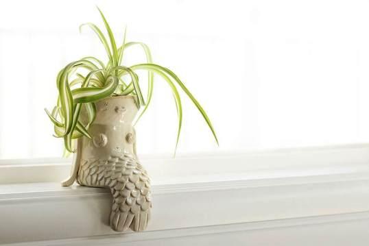 صور أوعية نباتات مميزة