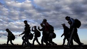 الهجرة واللجوء جديد أخبار الهجرة واللجوء