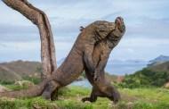 أكبر الكائنات الحية الموجودة على الأرض بعضها سيدهشك