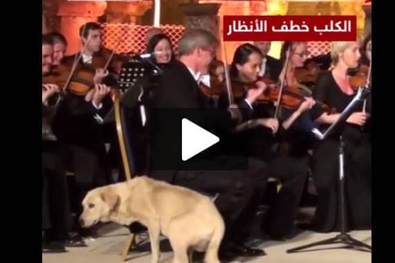 كلب يقتحم حفل موسيقي في أزمير التركية وسط تصفيق وضحك الجمهور