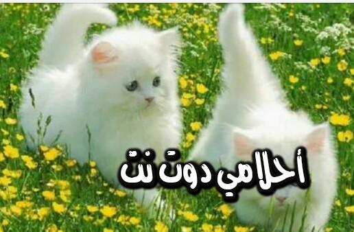 تفسير حلم القطط للعزباء في المنام احلامي دوت نت