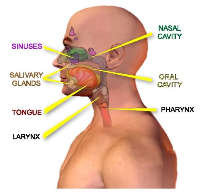 Symptoms Of Head And Neck Cancer American Head Neck Society