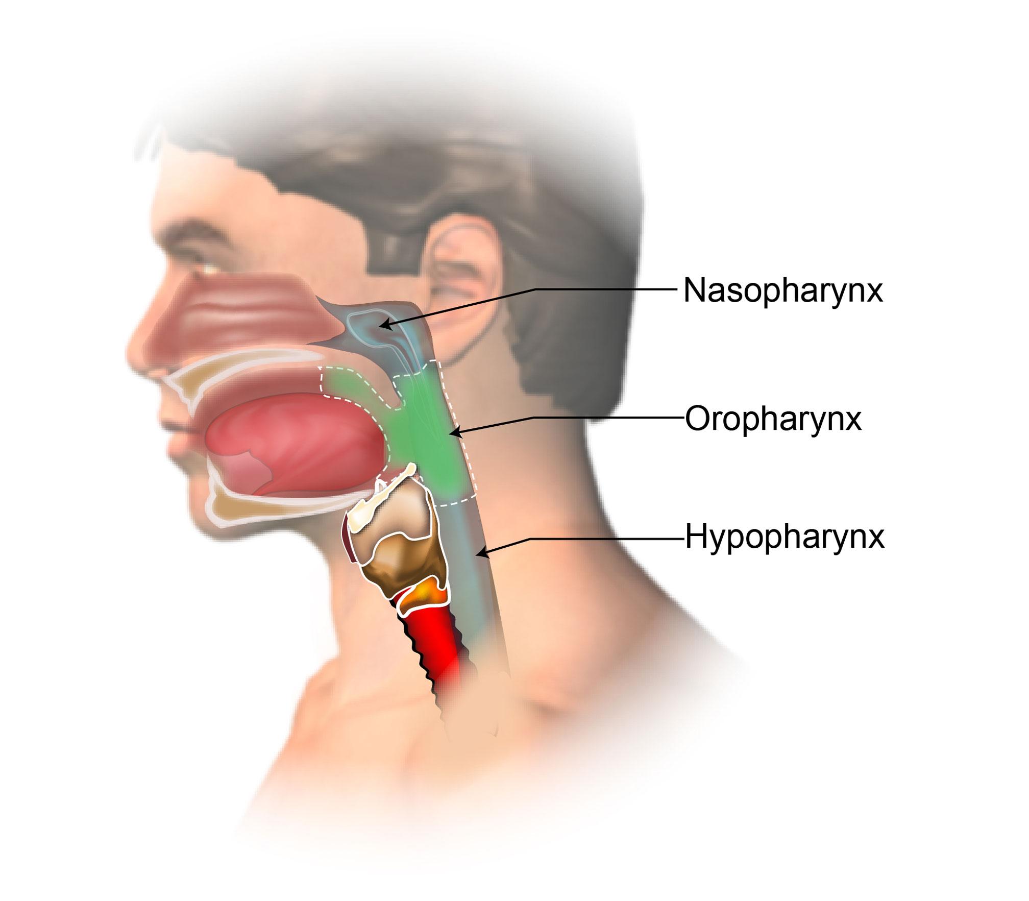 Pharyngeal Cancer