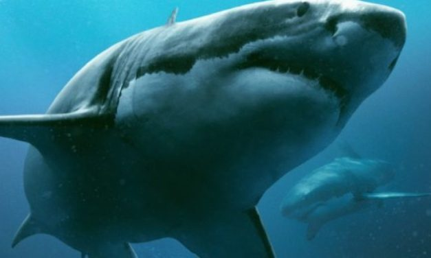 Medo Profundo | '47 Meters Down' ganha data de estreia no Brasil e trailer dublado