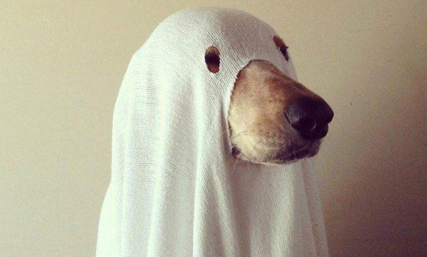 Será mesmo que cachorros e gatos enxergam fantasmas ?